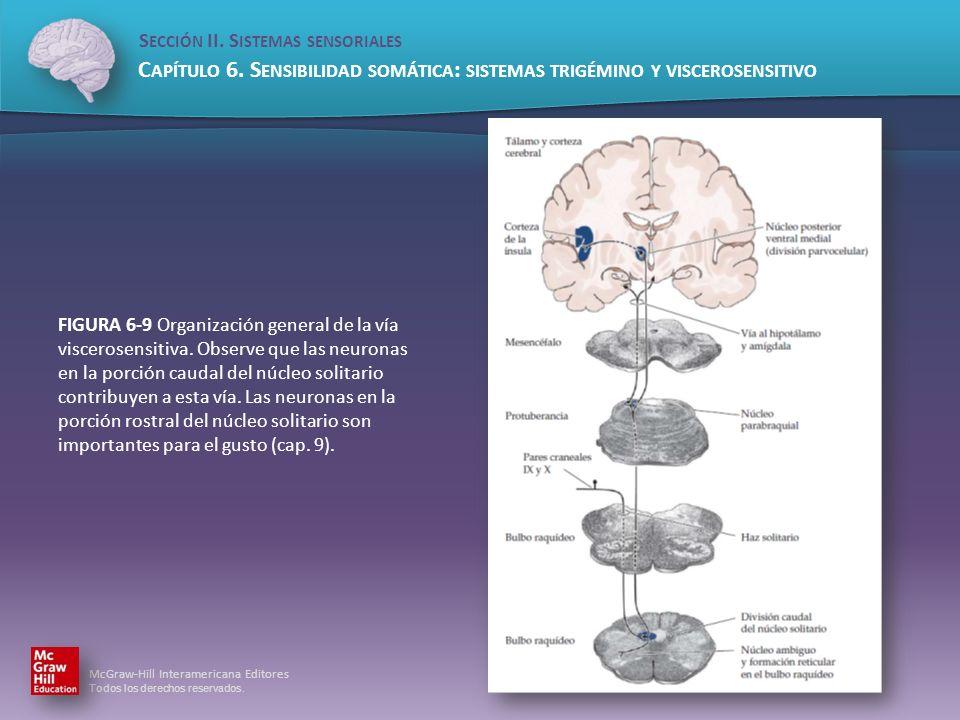 FIGURA 6-9 Organización general de la vía viscerosensitiva