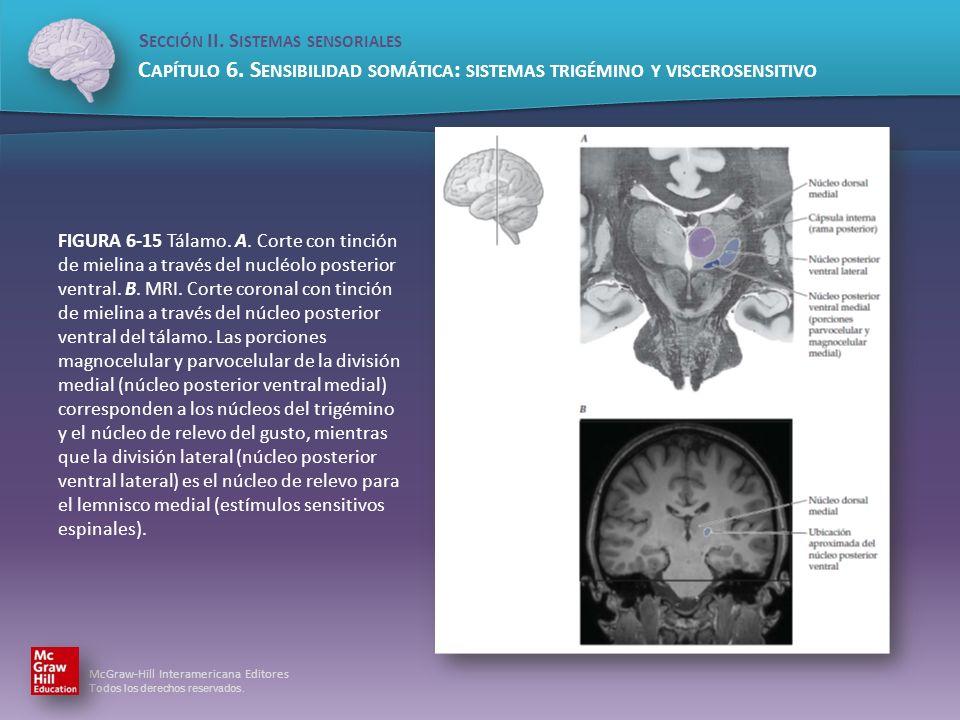 FIGURA 6-15 Tálamo. A. Corte con tinción de mielina a través del nucléolo posterior ventral.