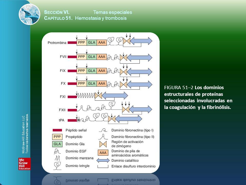 FIGURA 51–2 Los dominios estructurales de proteínas