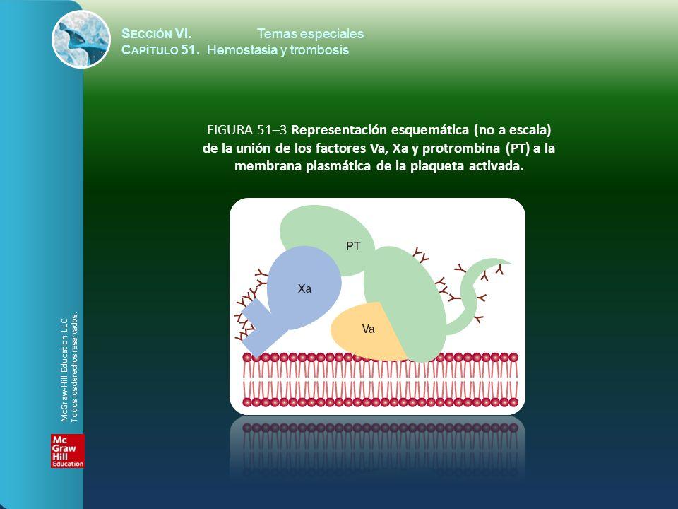 FIGURA 51–3 Representación esquemática (no a escala)