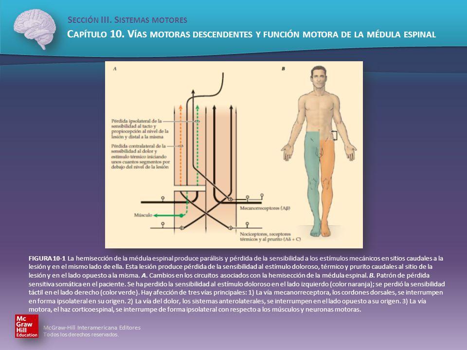 FIGURA 10-1 La hemisección de la médula espinal produce parálisis y pérdida de la sensibilidad a los estímulos mecánicos en sitios caudales a la lesión y en el mismo lado de ella.