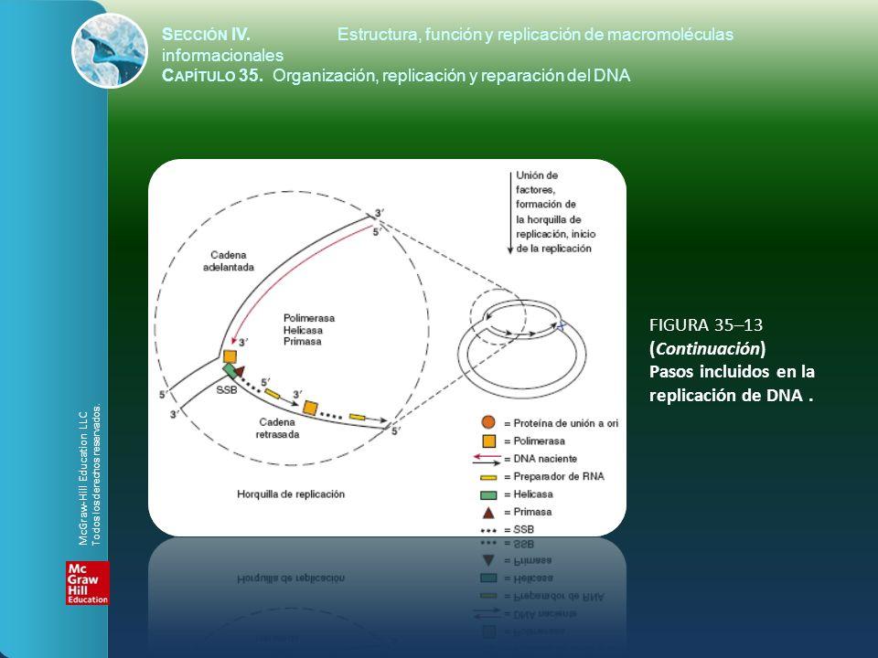 FIGURA 35–13 (Continuación) Pasos incluidos en la replicación de DNA .