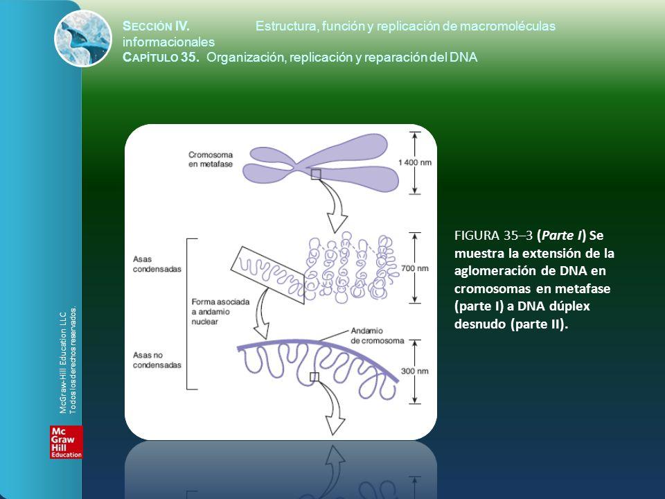 FIGURA 35–3 (Parte I) Se muestra la extensión de la