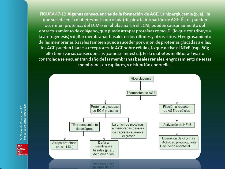 FIGURA 47-12 Algunas consecuencias de la formación de AGE