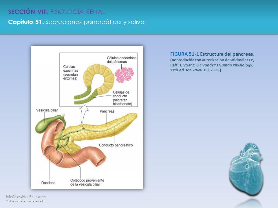FIGURA 51-1 Estructura del páncreas