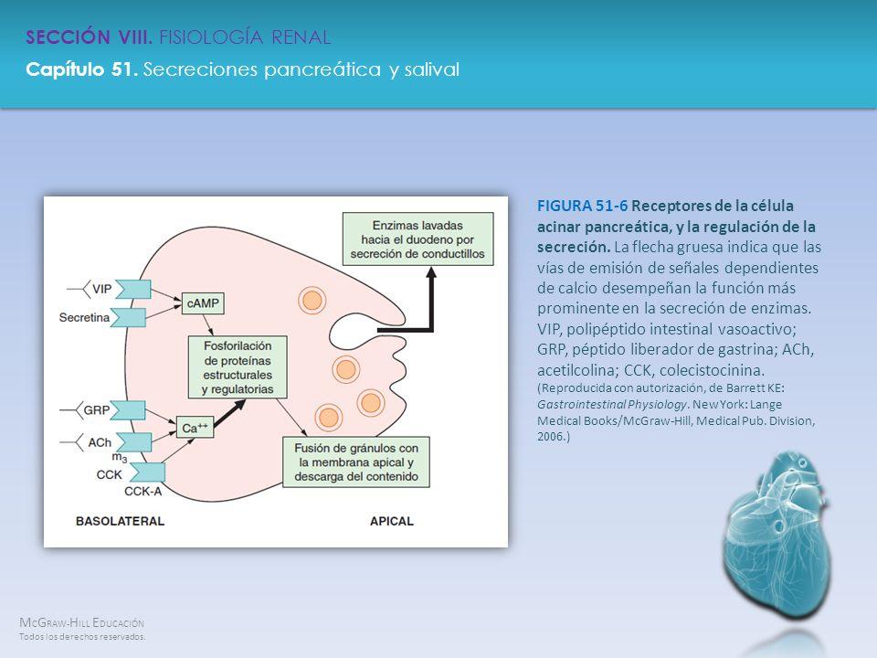 FIGURA 51-6 Receptores de la célula acinar pancreática, y la regulación de la secreción.