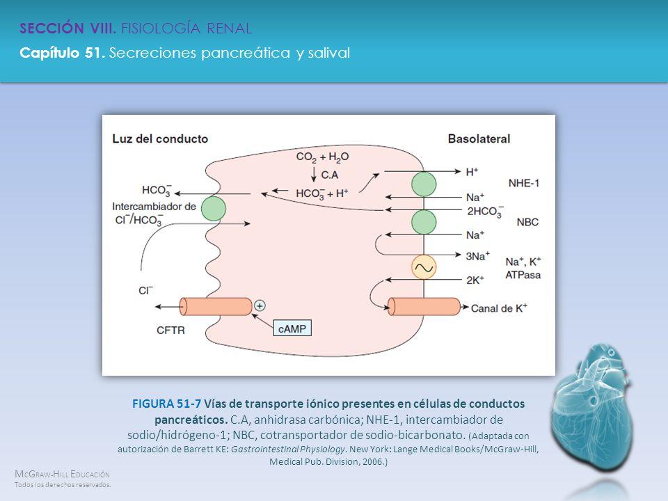 FIGURA 51-7 Vías de transporte iónico presentes en células de conductos pancreáticos.