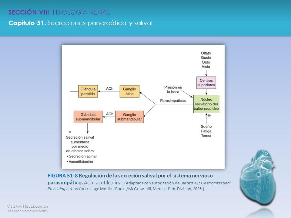 FIGURA 51-8 Regulación de la secreción salival por el sistema nervioso parasimpático.