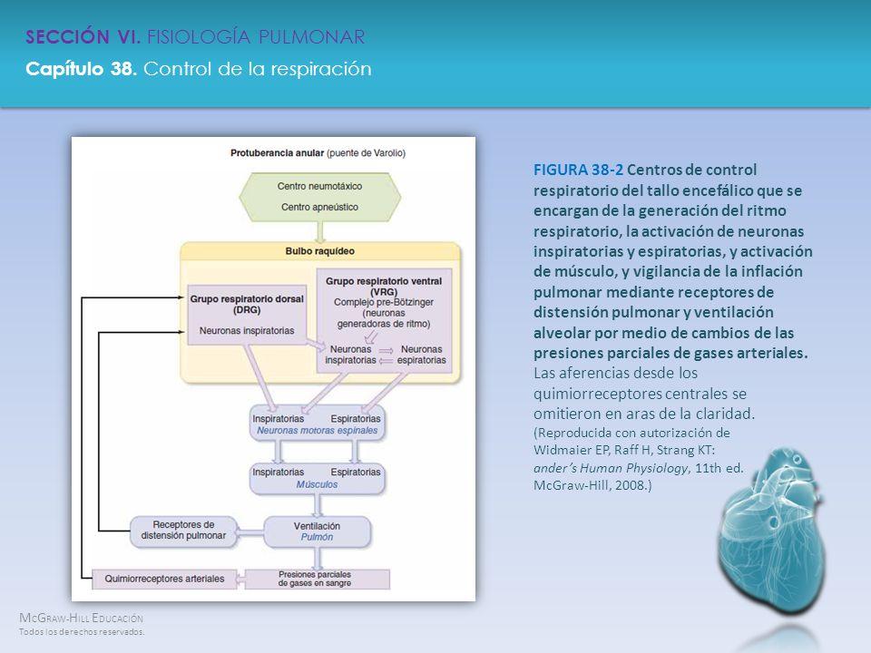 FIGURA 38-2 Centros de control respiratorio del tallo encefálico que se encargan de la generación del ritmo respiratorio, la activación de neuronas inspiratorias y espiratorias, y activación de músculo, y vigilancia de la inflación pulmonar mediante receptores de distensión pulmonar y ventilación alveolar por medio de cambios de las presiones parciales de gases arteriales.