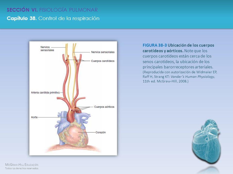 FIGURA 38-3 Ubicación de los cuerpos carotídeos y aórticos