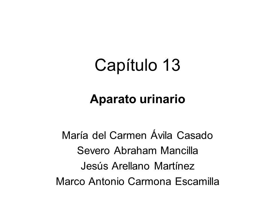 Capítulo 13 Aparato urinario María del Carmen Ávila Casado