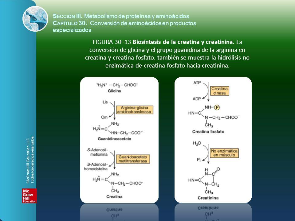 FIGURA 30–13 Biosíntesis de la creatina y creatinina. La