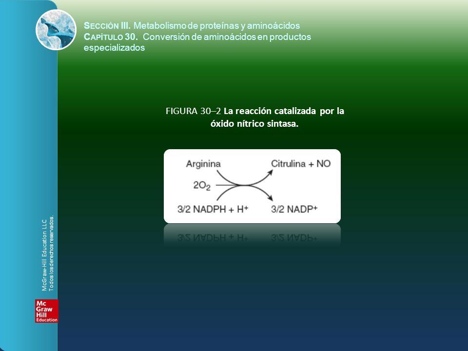 FIGURA 30–2 La reacción catalizada por la óxido nítrico sintasa.