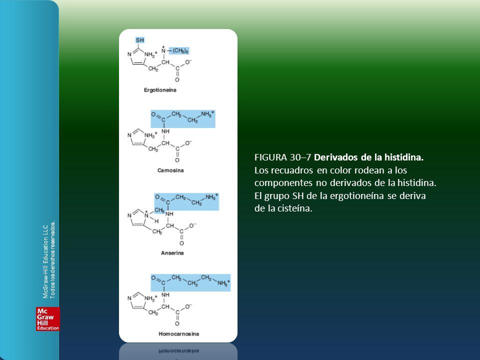 FIGURA 30–7 Derivados de la histidina