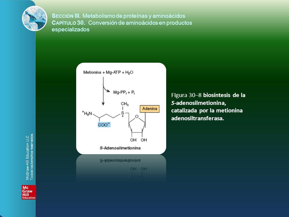 FIgura 30–8 biosíntesis de la S-adenosilmetionina,