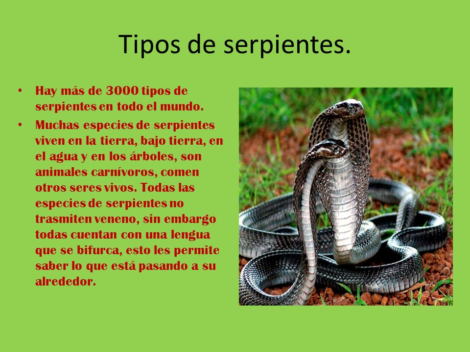 Serpientes ppt descargar for Cuantos tipos de arboles hay en el mundo