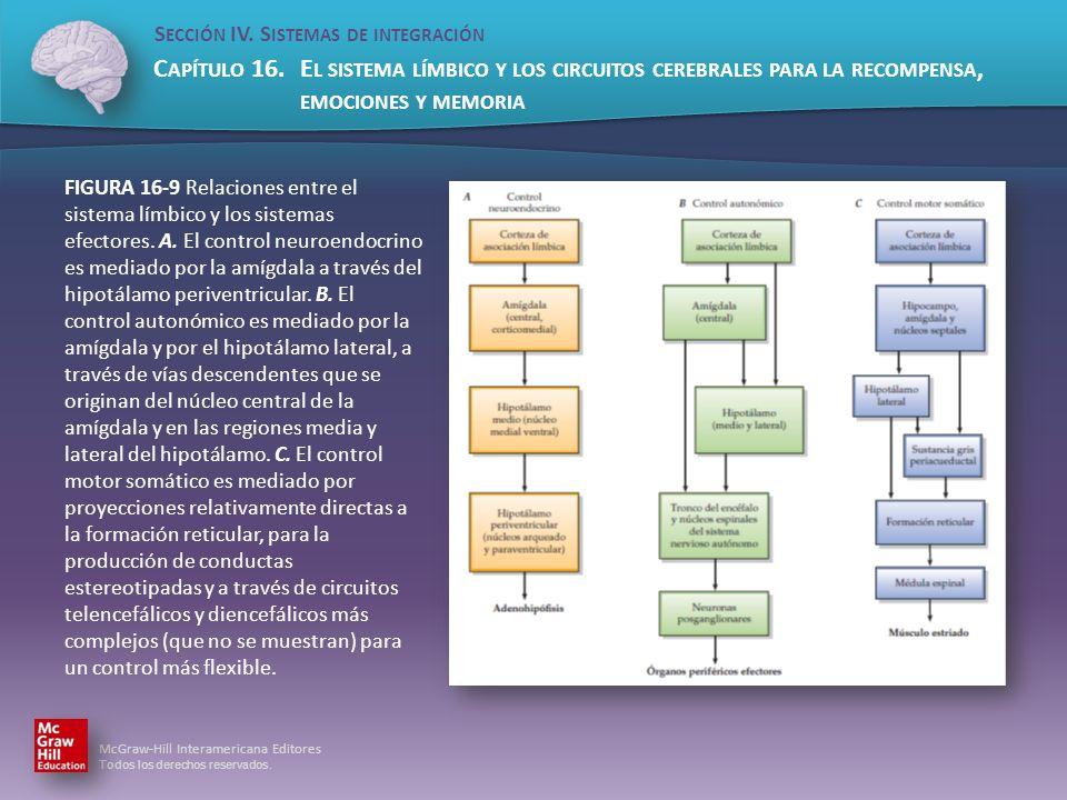 FIGURA 16-9 Relaciones entre el sistema límbico y los sistemas efectores.