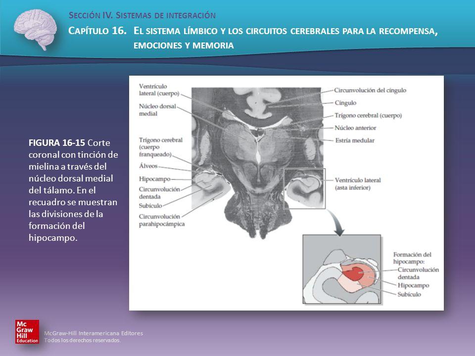 FIGURA 16-15 Corte coronal con tinción de mielina a través del núcleo dorsal medial del tálamo.
