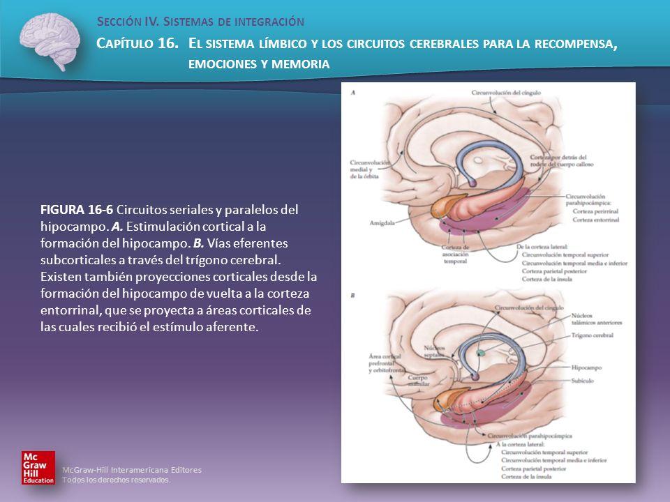 FIGURA 16-6 Circuitos seriales y paralelos del hipocampo. A
