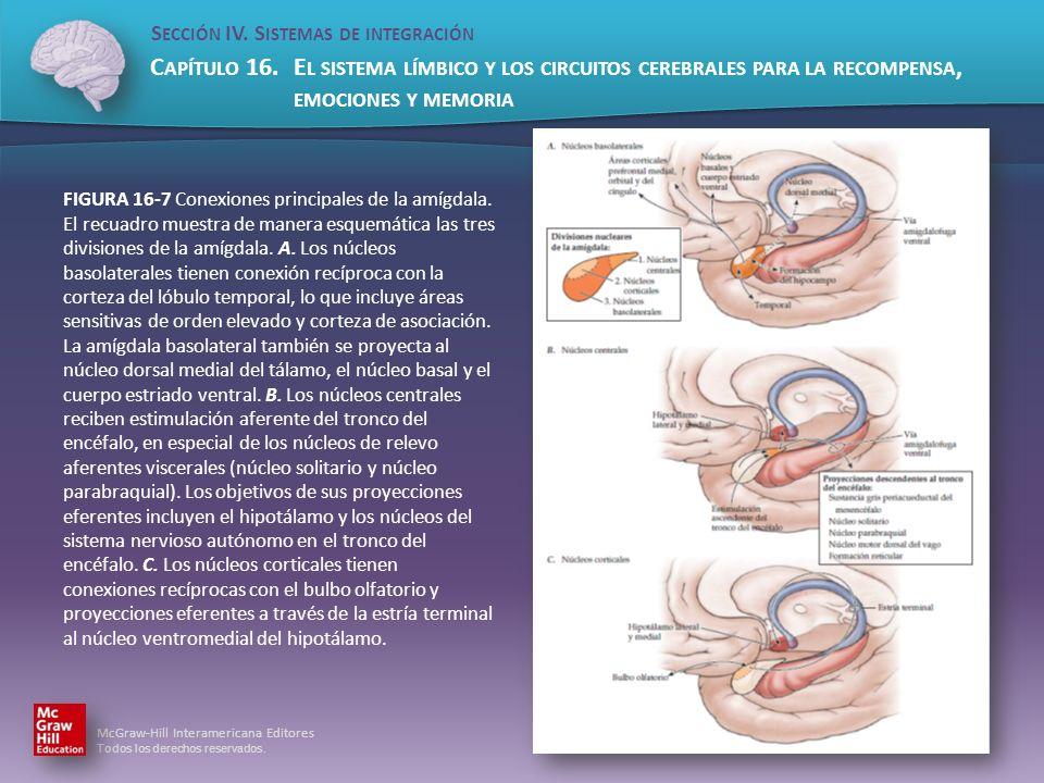 FIGURA 16-7 Conexiones principales de la amígdala