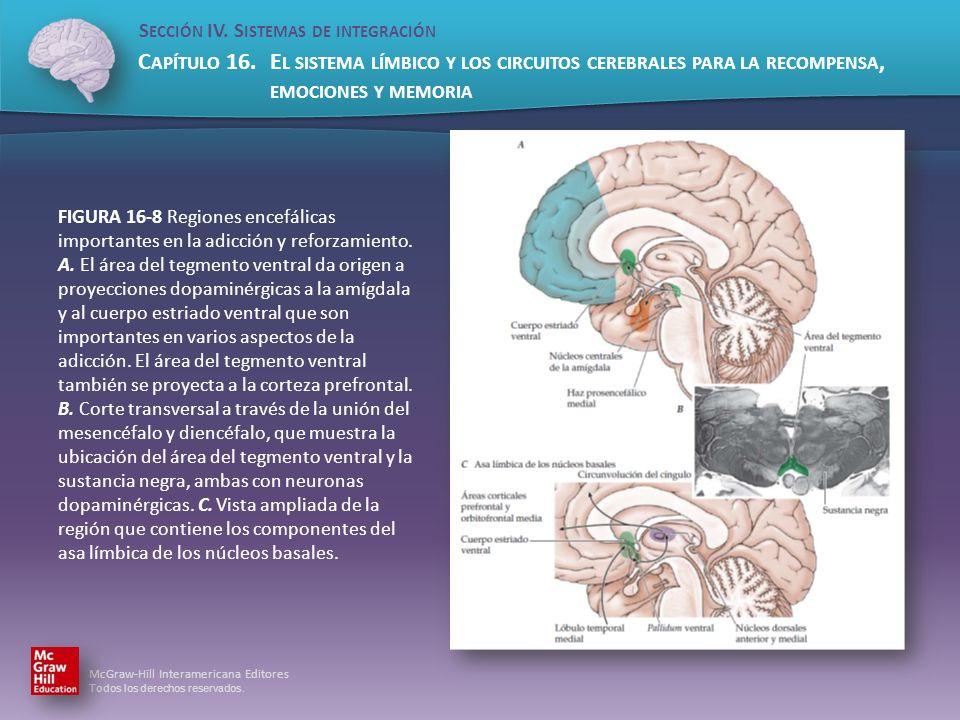 FIGURA 16-8 Regiones encefálicas importantes en la adicción y reforzamiento.
