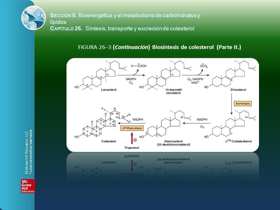FIGURA 26–3 (Continuación) Biosíntesis de colesterol (Parte II.)