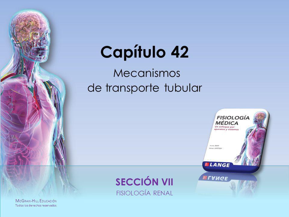 Capítulo 42 Mecanismos de transporte tubular