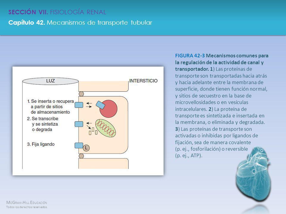 FIGURA 42-3 Mecanismos comunes para la regulación de la actividad de canal y transportador.