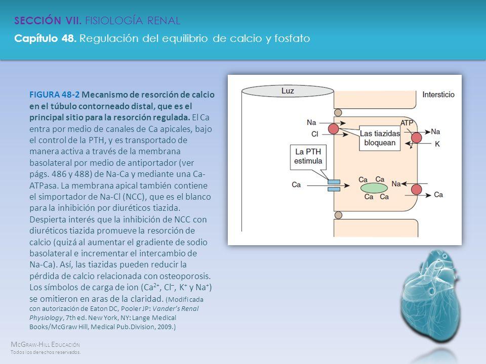 FIGURA 48-2 Mecanismo de resorción de calcio en el túbulo contorneado distal, que es el principal sitio para la resorción regulada.