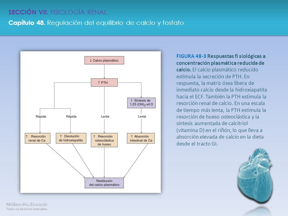 FIGURA 48-3 Respuestas fi siológicas a concentración plasmática reducida de calcio.
