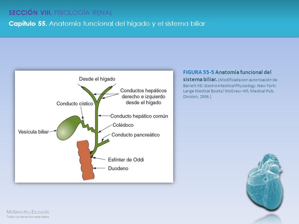 FIGURA 55-5 Anatomía funcional del sistema biliar