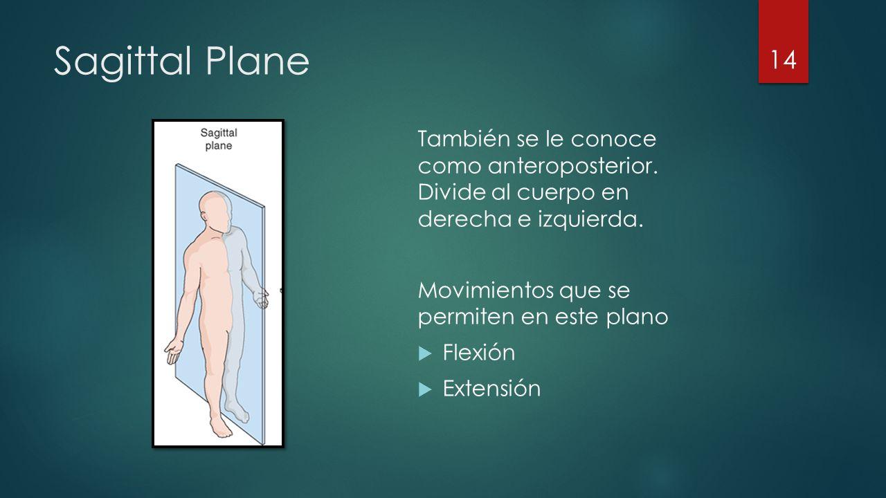 Sagittal Plane También se le conoce como anteroposterior. Divide al cuerpo en derecha e izquierda.
