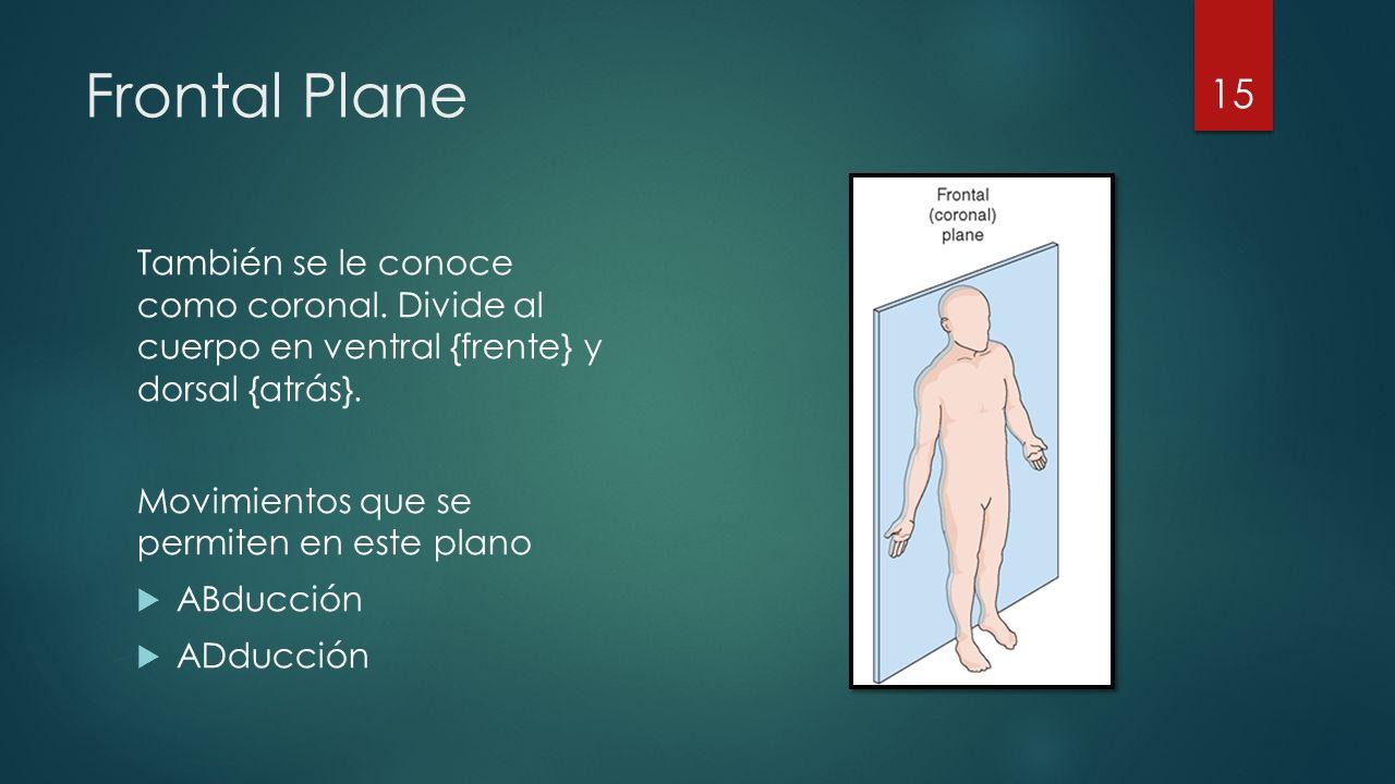 Frontal Plane También se le conoce como coronal. Divide al cuerpo en ventral {frente} y dorsal {atrás}.