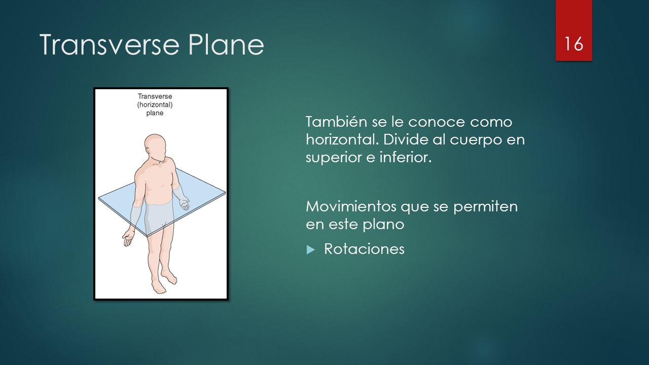 Transverse Plane También se le conoce como horizontal. Divide al cuerpo en superior e inferior. Movimientos que se permiten en este plano.