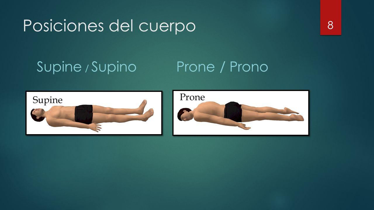 Posiciones del cuerpo Supine / Supino Prone / Prono