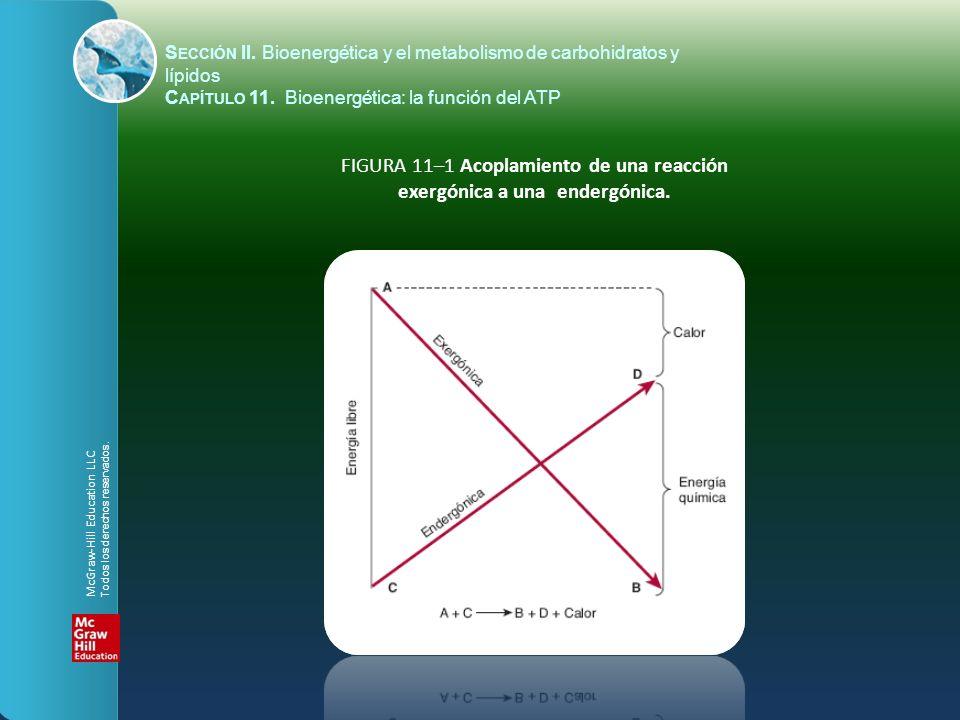 FIGURA 11–1 Acoplamiento de una reacción exergónica a una endergónica.