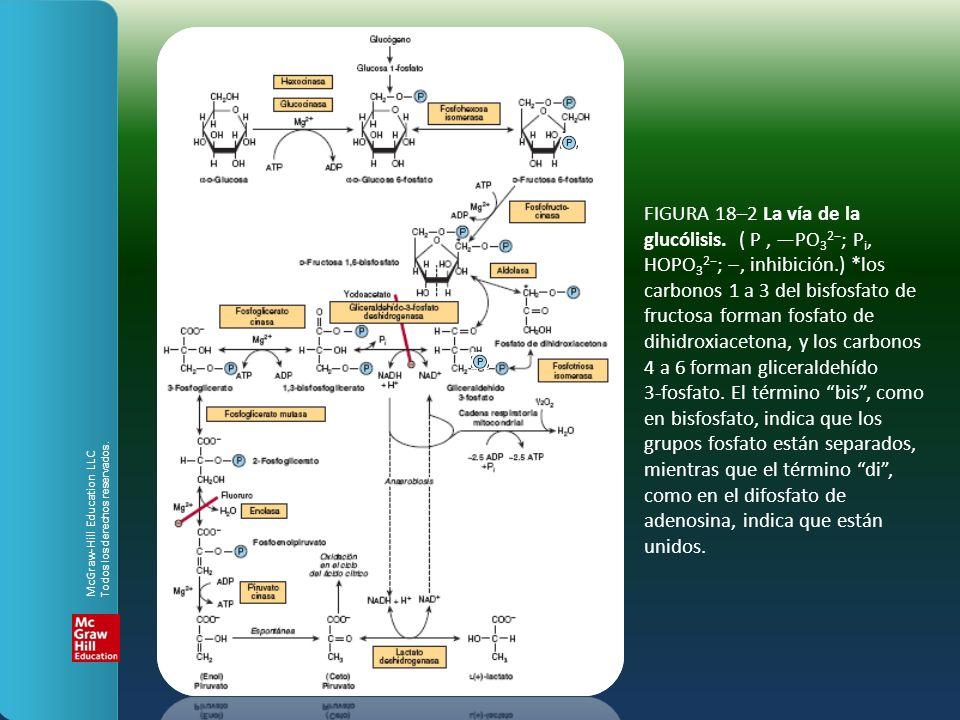 FIGURA 18–2 La vía de la glucólisis