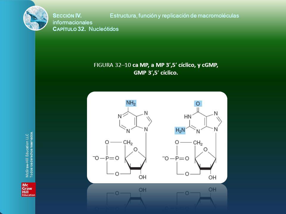 FIGURA 32–10 ca MP, a MP 3′,5′ cíclico, y cGMP, GMP 3′,5′ cíclico.