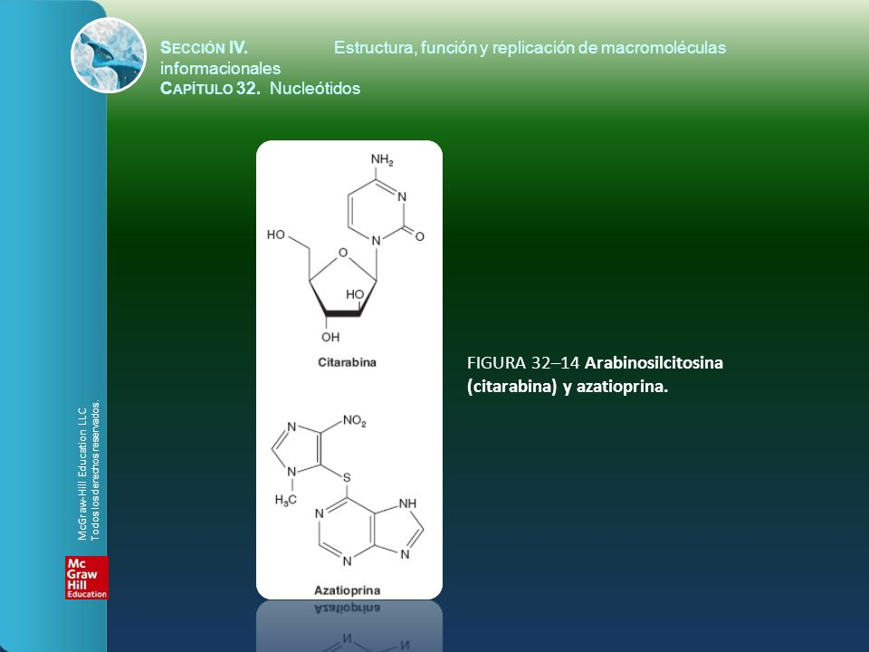 FIGURA 32–14 Arabinosilcitosina (citarabina) y azatioprina.