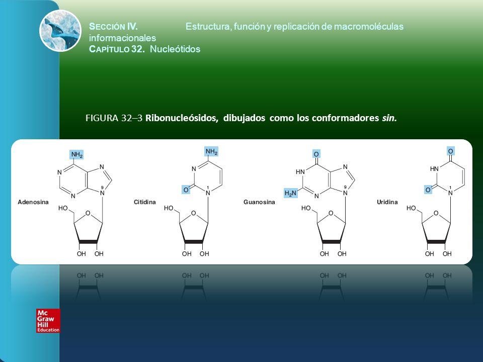 FIGURA 32–3 Ribonucleósidos, dibujados como los conformadores sin.
