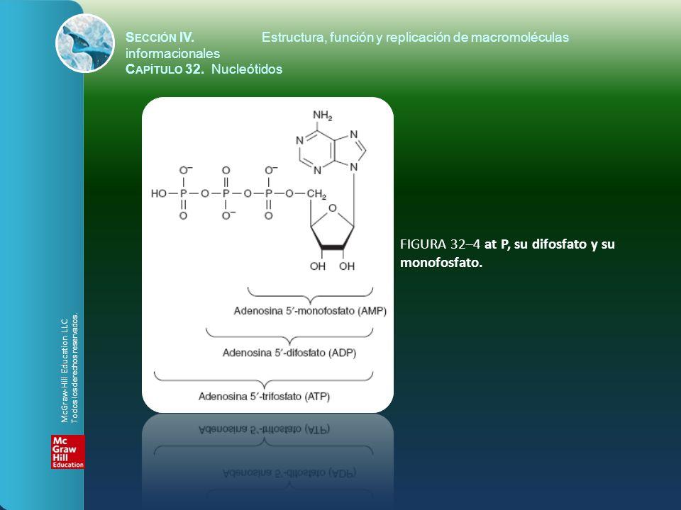 FIGURA 32–4 at P, su difosfato y su monofosfato.