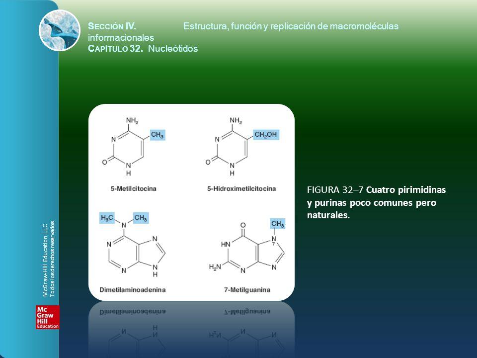 FIGURA 32–7 Cuatro pirimidinas y purinas poco comunes pero naturales.