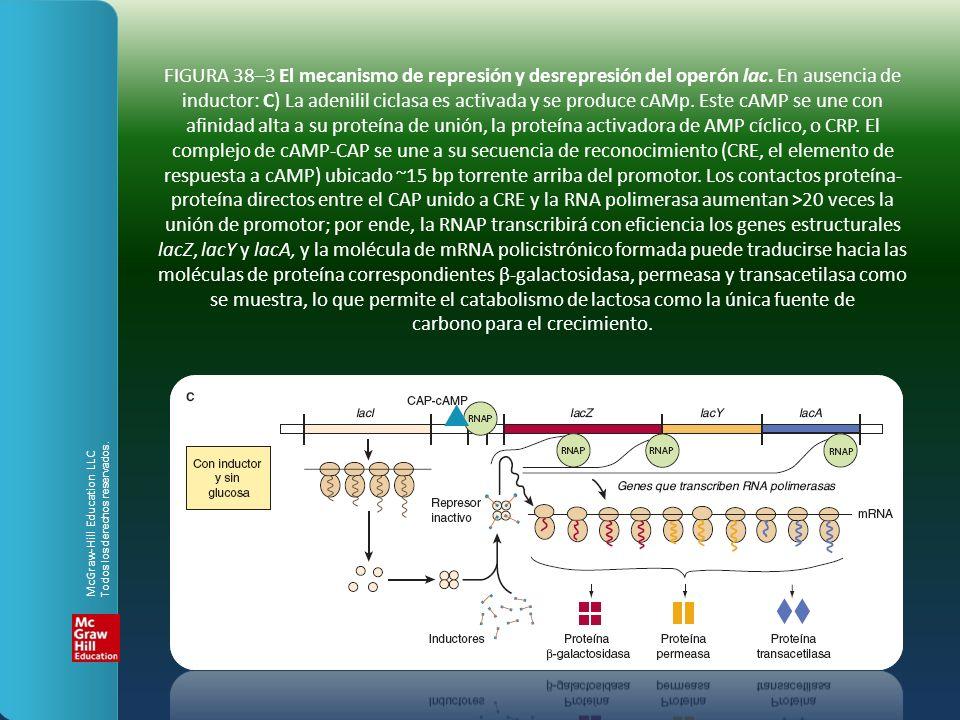 FIGURA 38–3 El mecanismo de represión y desrepresión del operón lac
