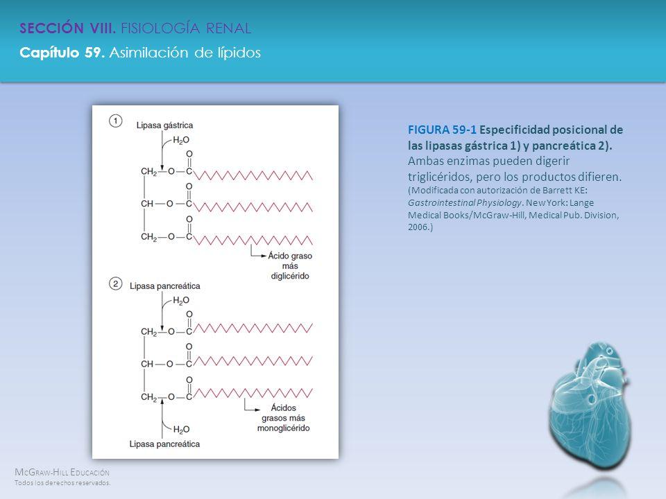 FIGURA 59-1 Especificidad posicional de las lipasas gástrica 1) y pancreática 2).