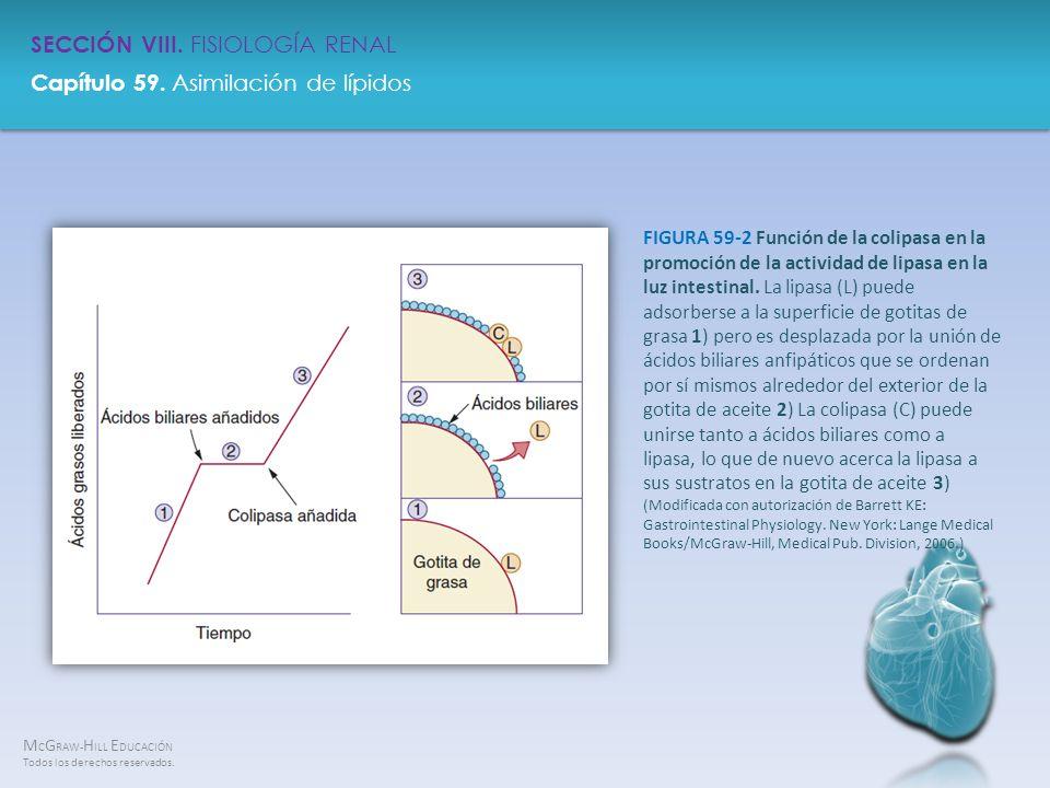 FIGURA 59-2 Función de la colipasa en la promoción de la actividad de lipasa en la luz intestinal.