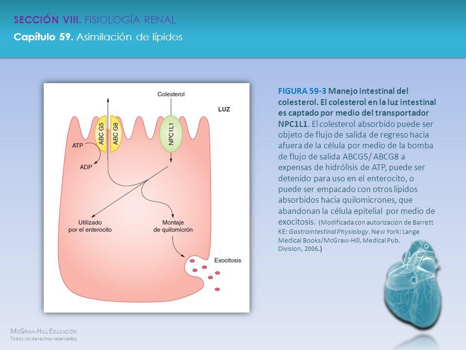 FIGURA 59-3 Manejo intestinal del colesterol