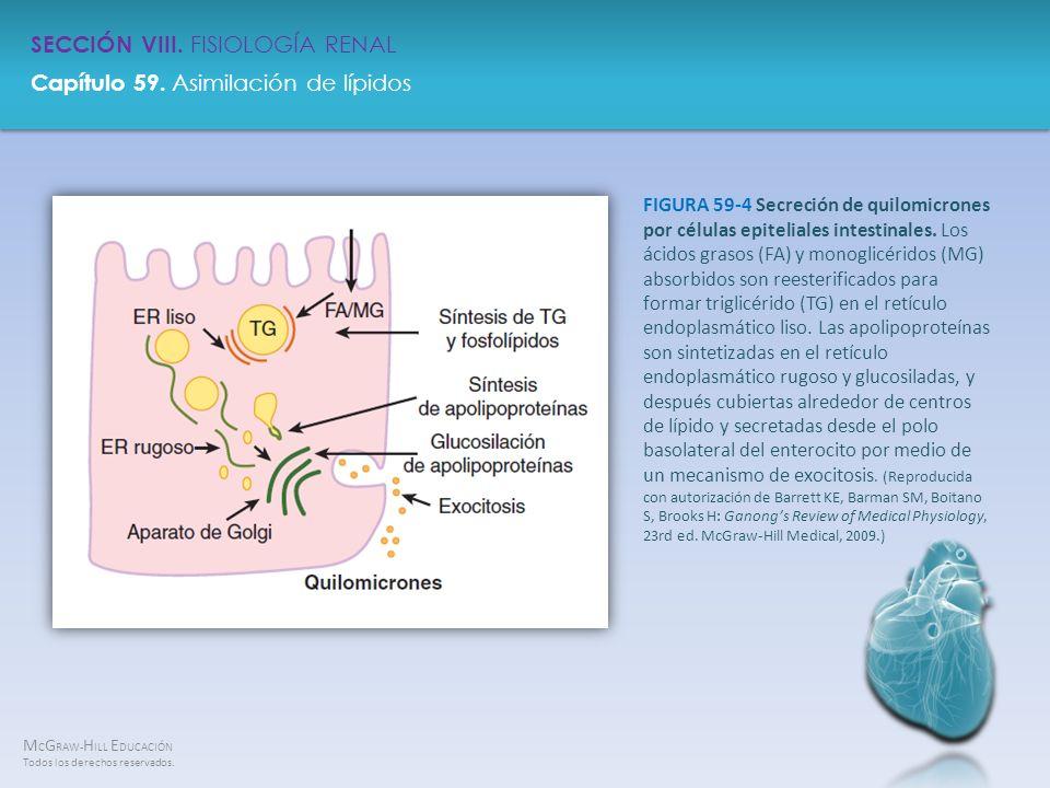 FIGURA 59-4 Secreción de quilomicrones por células epiteliales intestinales.