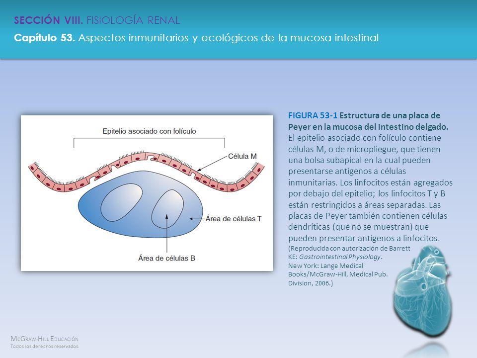 FIGURA 53-1 Estructura de una placa de Peyer en la mucosa del intestino delgado.