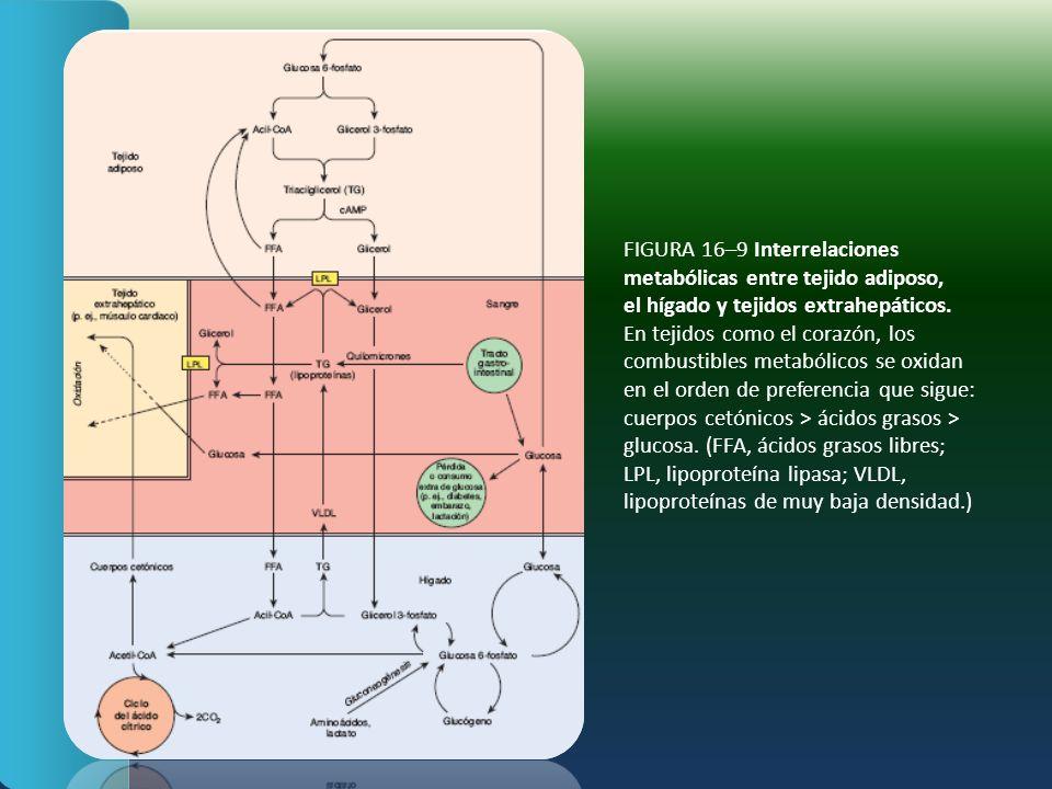 FIGURA 16–9 Interrelaciones