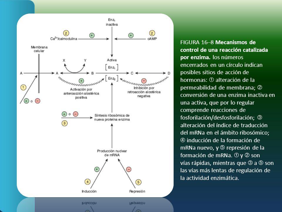 FIGURA 16–8 Mecanismos de control de una reacción catalizada por enzima. los números